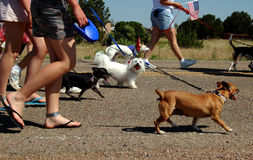Es ist das Leben eines Hundes Lizenzfreie Stockbilder
