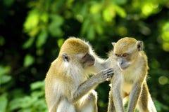 Es ist ein Bild, das Freundschaft zwischen Tieren mitteilt Lizenzfreie Stockfotos