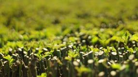 Es ist ein Garten für Pflänzchen haben viele von Pflänzchen lizenzfreie stockbilder