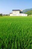 Es ist ein grünes Paddyfeld und ein schönes Dorf. Stockfotografie