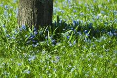 Es ist Frühjahr Stockbild