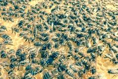 Es ist neue Familie der Bienen, die vom Teil Insekten von quiverful einem sich bildeten Stockfoto