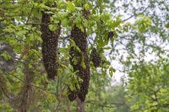 Es ist neue Familie der Bienen, die vom Teil Insekten von quiverful einem sich bildeten Stockfotografie