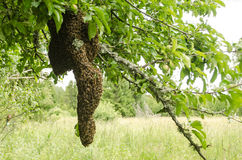 Es ist neue Familie der Bienen, die vom Teil Insekten von quiverful einem sich bildeten Lizenzfreie Stockfotos