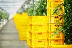 Es ist Zeit für das Ernten! Lizenzfreies Stockbild
