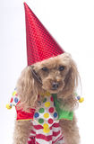 Es mi cumpleaños Imagen de archivo libre de regalías