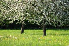 Es ` s Frühjahr Lizenzfreies Stockfoto