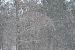 Es ` s Schneien Stockbilder