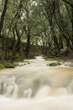 Es Salt des Freu, river in Majorca Royalty Free Stock Images
