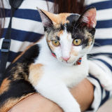 Es trägt eine Katze durch den Inhaber und sein Auge starren entlang irgendeiner Identifikation an Stockfotos