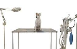Es un pequeño perro lindo Imagen de archivo libre de regalías