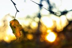 Es un poco calor del sol del invierno Foto de archivo libre de regalías
