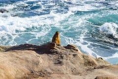 ¿Es una roca o un león marino? fotografía de archivo