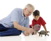 Esame della tartaruga fotografia stock libera da diritti