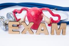 Esame o esame ginecologico nel concetto di ginecologia Il modello dell'utero con le ovaie è stetoscopio vicino e parola o compost Fotografie Stock