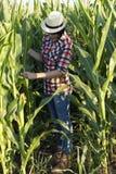 Esamina la qualità di giovane cereale Fotografia Stock Libera da Diritti
