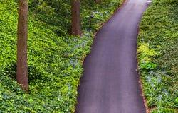 Esaminando giù un percorso del terreno boscoso nei giardini di Longwood, PA Fotografia Stock Libera da Diritti