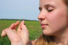 Esaminando ladybug Fotografia Stock Libera da Diritti