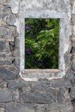 Esaminando le ipomee sebbene finestra di rovina Fotografia Stock