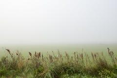 Esaminare un campo nebbioso con alta erba nella priorità alta Fotografia Stock Libera da Diritti