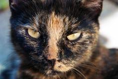Esamini gli occhi di un gatto Immagini Stock Libere da Diritti