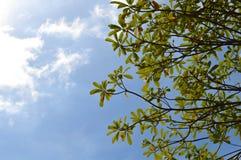 Esamini il cielo Fotografia Stock