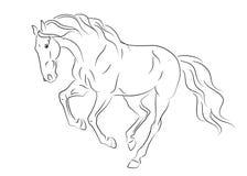 Esboço andaluz Running do cavalo Fotografia de Stock