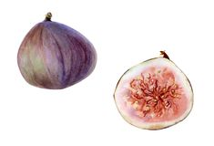 Esboço botânico dos figos Fotografia de Stock Royalty Free