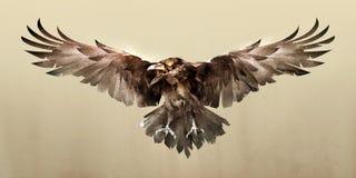 Esboço colorido de uma parte dianteira do corvo do pássaro de voo Imagens de Stock Royalty Free