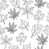 Esboço com folhas de outono Teste padrão sem emenda Ilustração do vetor Rebecca 36 Fotos de Stock