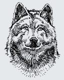 Esboço da cabeça do lobo Imagens de Stock