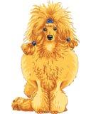 Esboço da cor da raça vermelha da caniche do cão ilustração stock