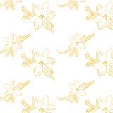 Esboço da flor da baunilha na composição branca do quadrado do fundo Imagens de Stock Royalty Free