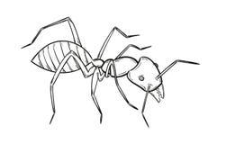 Esboço da formiga ilustração stock