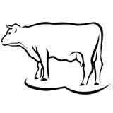 Esboço da vaca Imagens de Stock Royalty Free