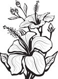 Esboço de flores do hibiscus Imagens de Stock Royalty Free