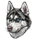 Esboço de Husky Dog Imagem de Stock