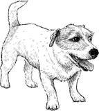 Esboço de um cão pequeno engraçado Imagem de Stock Royalty Free