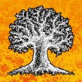 Esboço de uma árvore Fotografia de Stock Royalty Free
