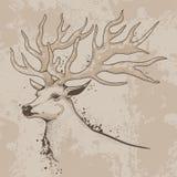 Esboço de uma cabeça dos cervos com chifres Fotos de Stock