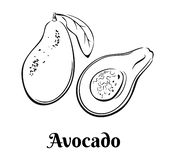 Esboço do abacate Ícone preto e branco do vegetal e da fatia inteiros ilustração do vetor