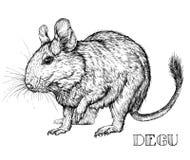 Esboço do animal de estimação do roedor de Degu Ilustração do vetor Fotografia de Stock