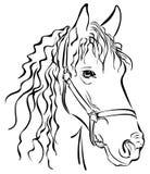 Esboço do close up do cavalo Fotos de Stock Royalty Free