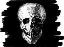 Esboço do crânio Fotografia de Stock
