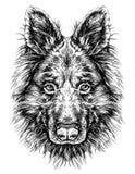 Esboço do pastor do cão Ilustração do vetor Imagem de Stock