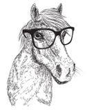 Esboço do retrato do cavalo Fotografia de Stock