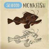 Esboço do tamboril ou do mar-diabo, da pesca-rã ou dos peixes ilustração stock