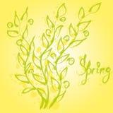 Esboço do vetor de ramos verdes com folhas Fotografia de Stock