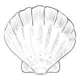 Esboço do vetor do shell do fã Fotografia de Stock