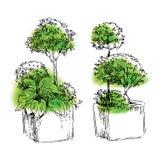 Esboço dos elementos do jardim Fotos de Stock